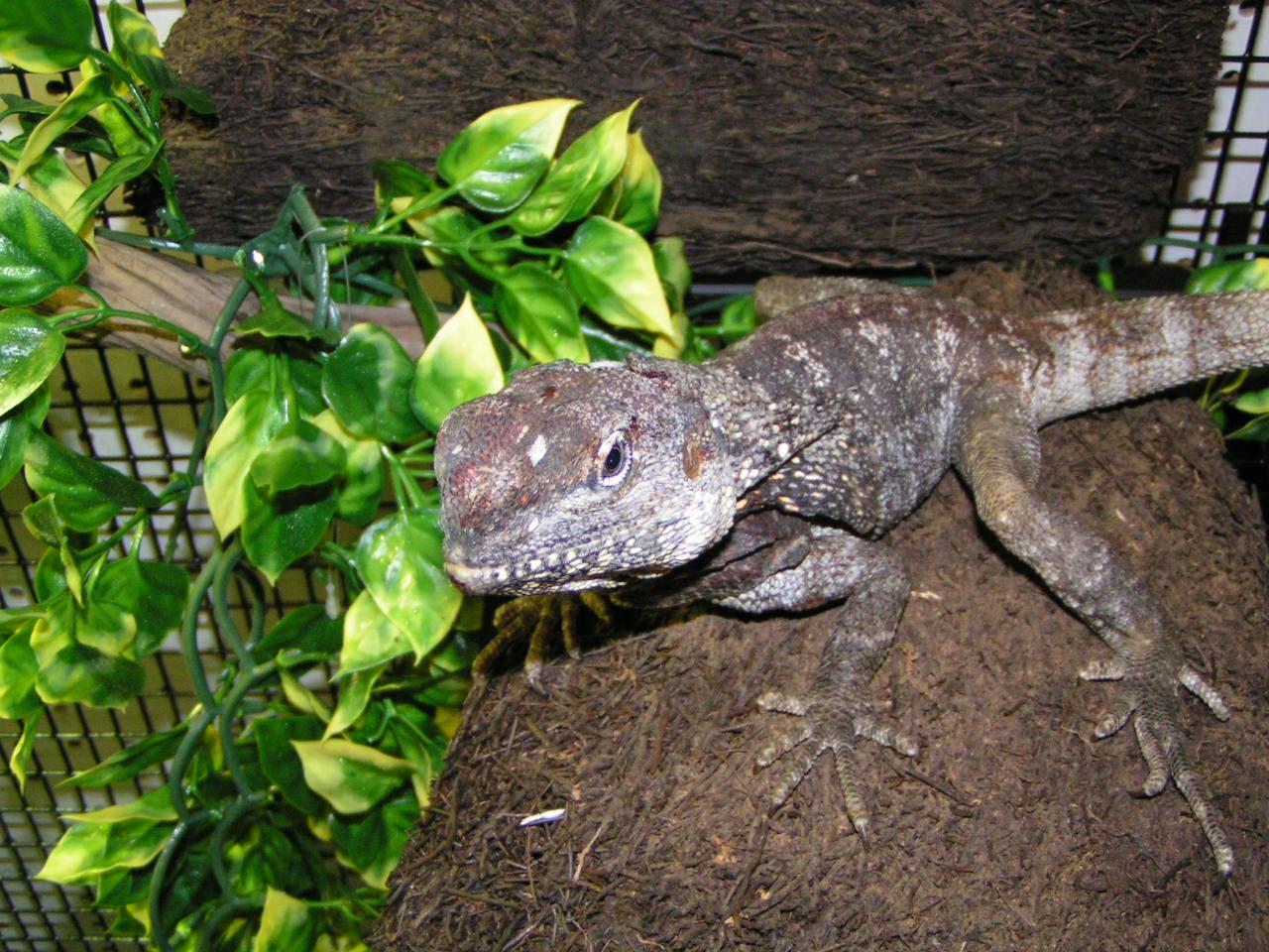 tropical hut portland oregon reptiles pet store